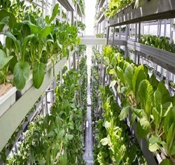 Esperto Market research, Vertical Farming Market-Global Analysis and Forecast (2017-2023), Global Vertical Farming Market Report 2017